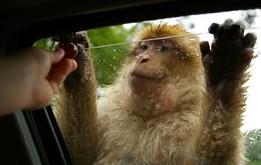 Safari Park Adventure 3D